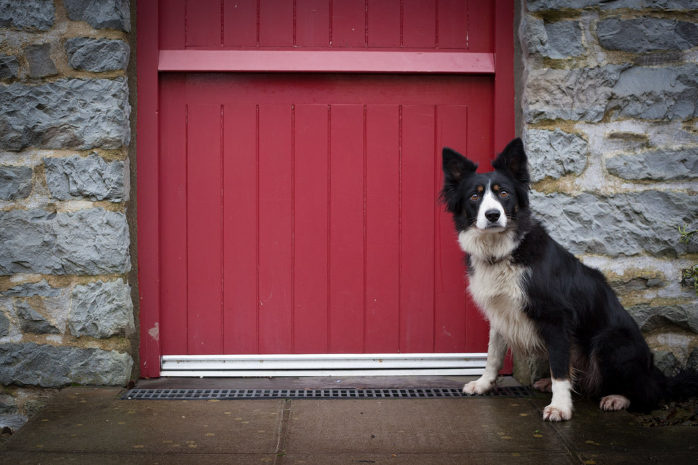 Sheep dog with red door