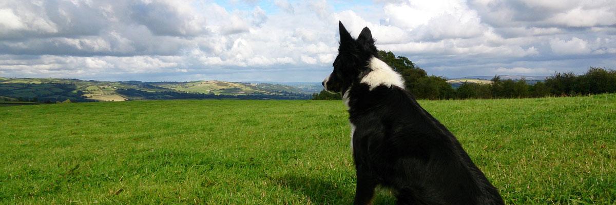 Dog landscape