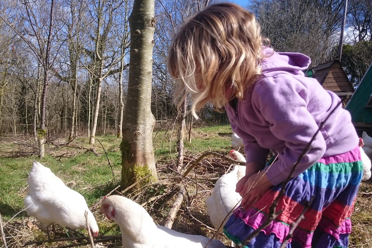 meeting the chickens